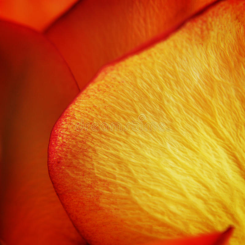 Macro abstract photograph of rose petals stock photos