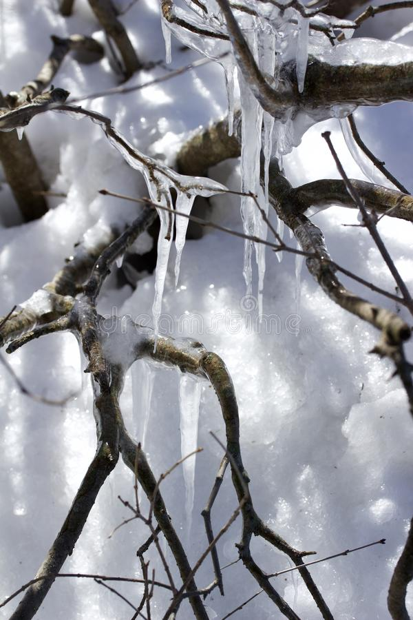 Macro abstract view of melting snow and ice creating icicles on a bare branch tree stock image