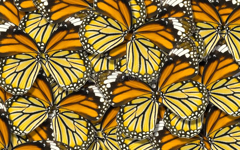 Macro abstrait de fond de nature de fond d'aile de papillon photographie stock