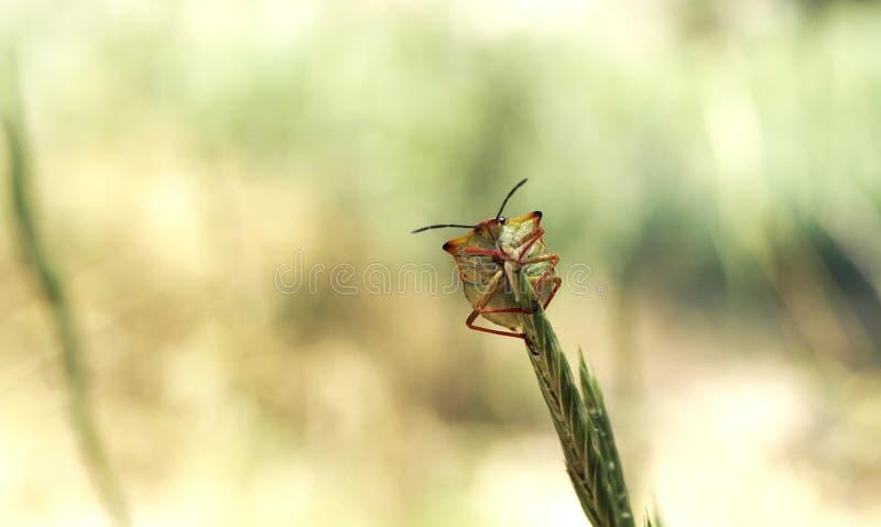 Macro adorable del insecto foto de archivo