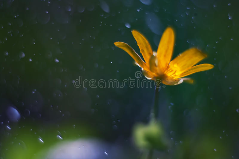 Macro amarelo da flor foto de stock royalty free