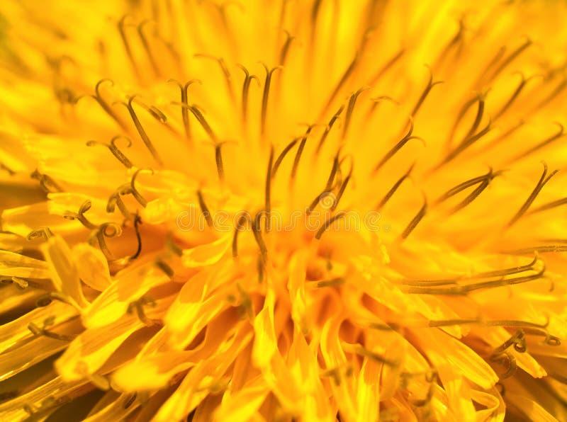 Macro amarilla abstracta de la flor imagen de archivo