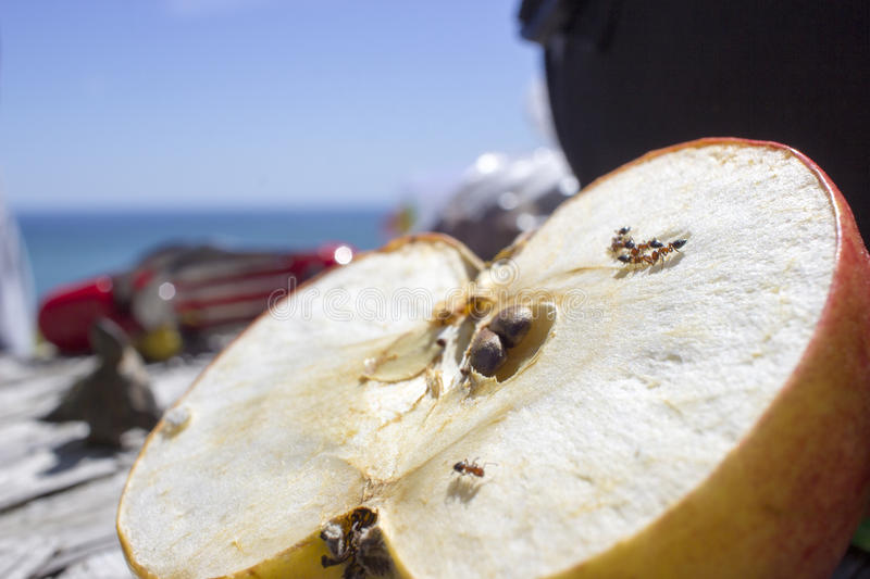 Macro of ants eating an apple. A macro shot of several ants on a cut in half apple. The Black Sea can be seen in the background stock photo