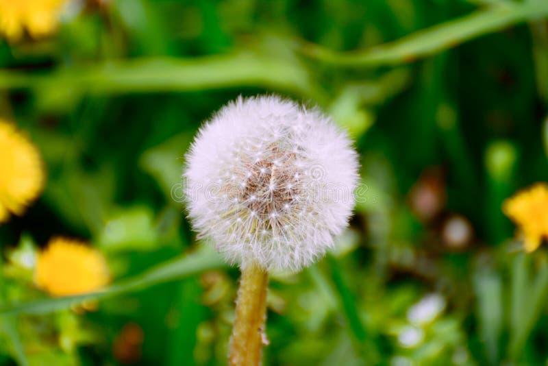 Download Macro stock photo. Image of macro, awesome, garden, nature - 90917250