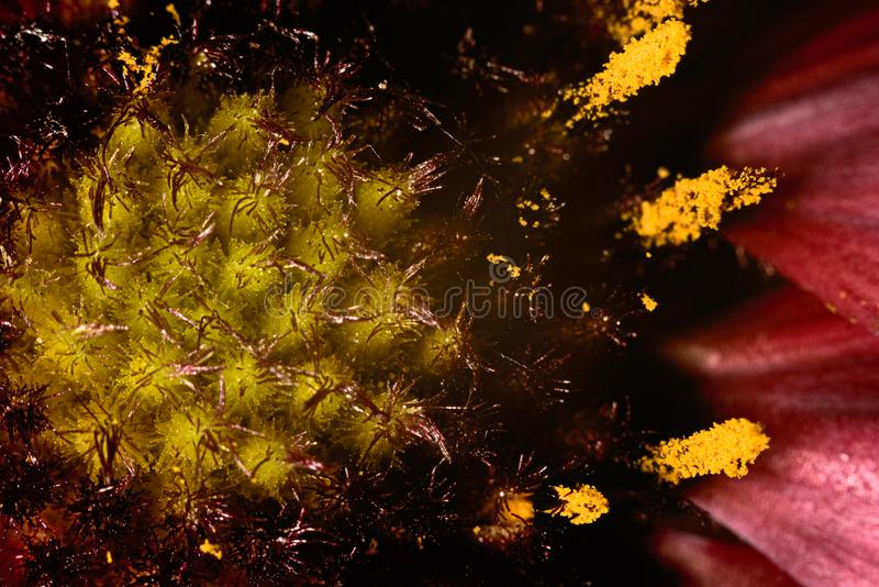 Macro of a flower, stamens, pistil and pollen. Macro background of a flower, stamens, pistil and pollen royalty free stock images