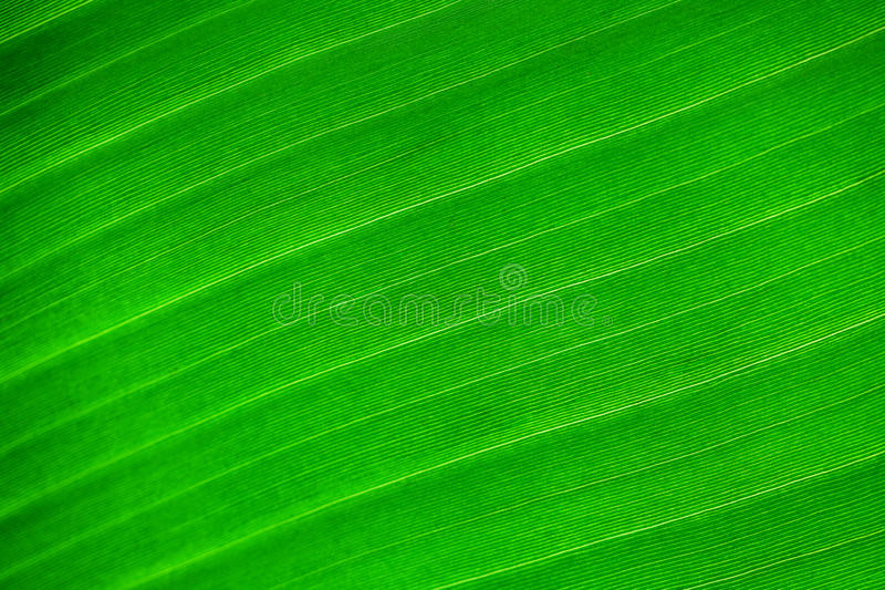 Background of green leaf royalty free stock image
