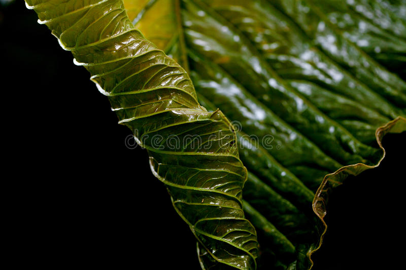 Background of green leaf stock image
