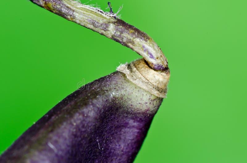 Download Macro bean stock photo. Image of fresh, vitamins, diet - 21173898