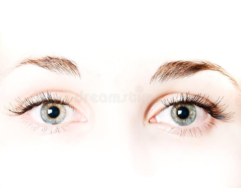 Macro beautiful female eye