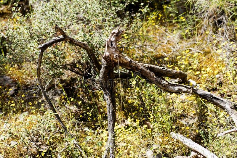 Macro beaux-arts de fond d'ozora Trippy d'arbre dans les produits de haute qualit? 50,6 Megapixels d'impression photo libre de droits
