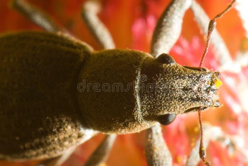 Macro of a beetle stock photo