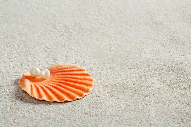Macro blanca de la almeja del shell de la perla de la arena de la playa imagen de archivo
