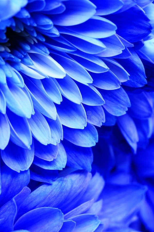 Macro bleu de fleur photographie stock