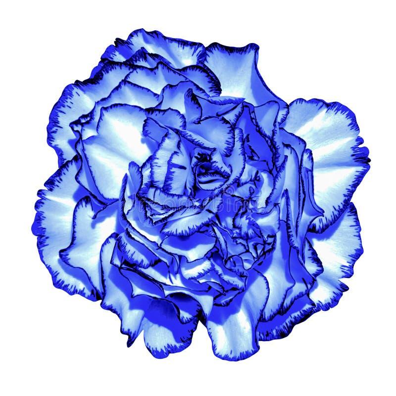 Macro bleu-foncé surréaliste de fleur d'amour de  du chrome Ñ d'isolement image libre de droits