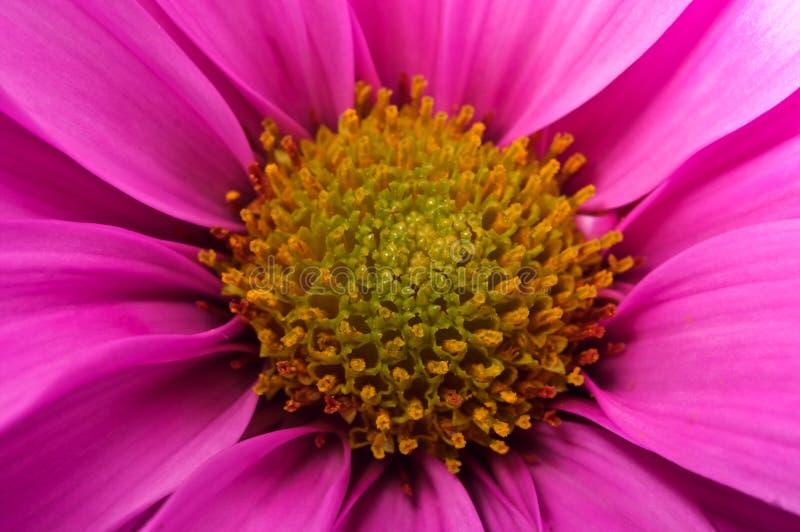 Macro bloem stock afbeeldingen