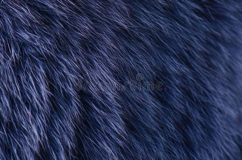 Macro blu della pelliccia immagini stock