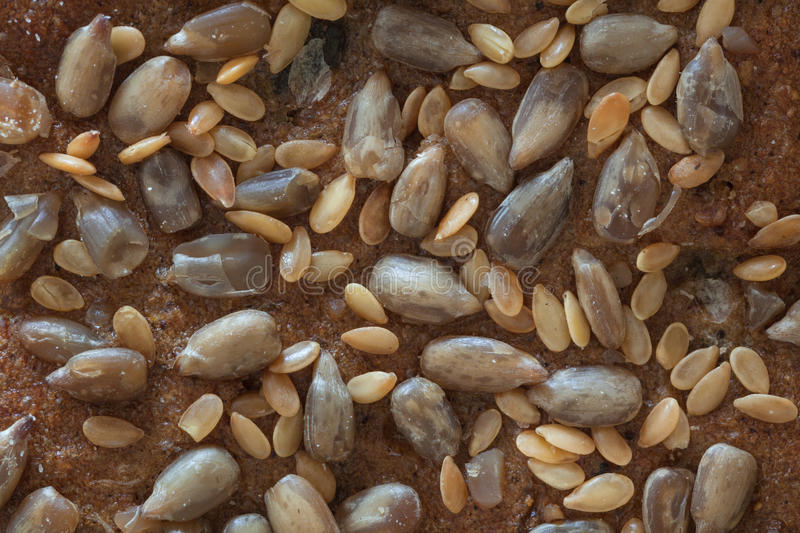 Macro of a bread with seeds, top part. Macro from a top part of a bread with seeds royalty free stock photos
