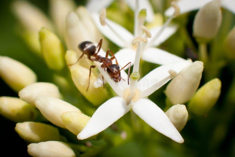 Macro brown ant stock photo