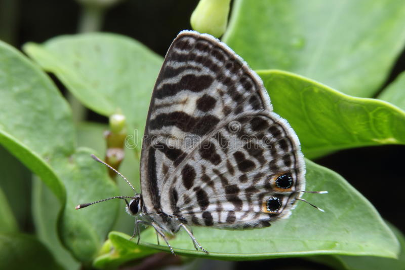 Macro brown Butterfly. On tree royalty free stock image