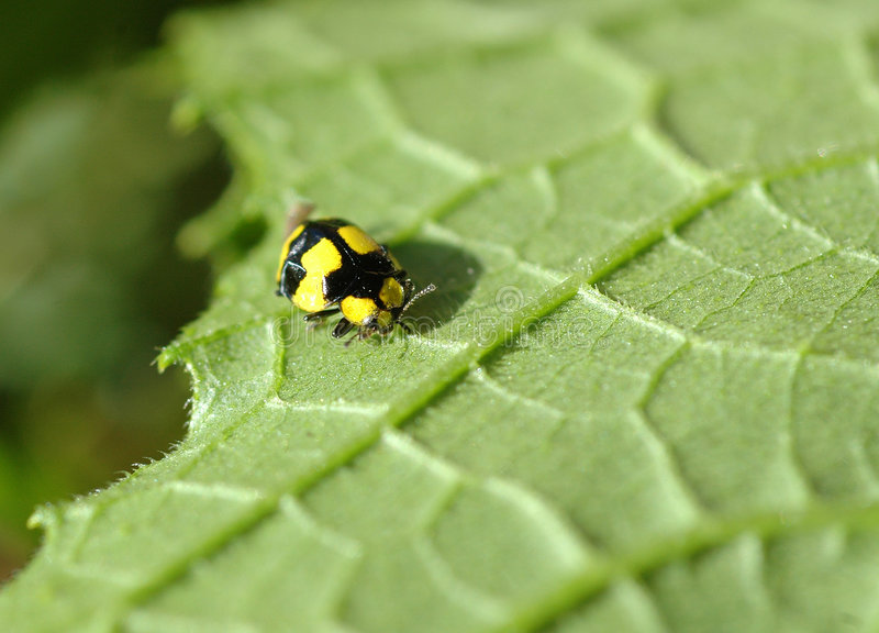 Download Macro bug stock image. Image of nature, macro, legs, plant - 116003