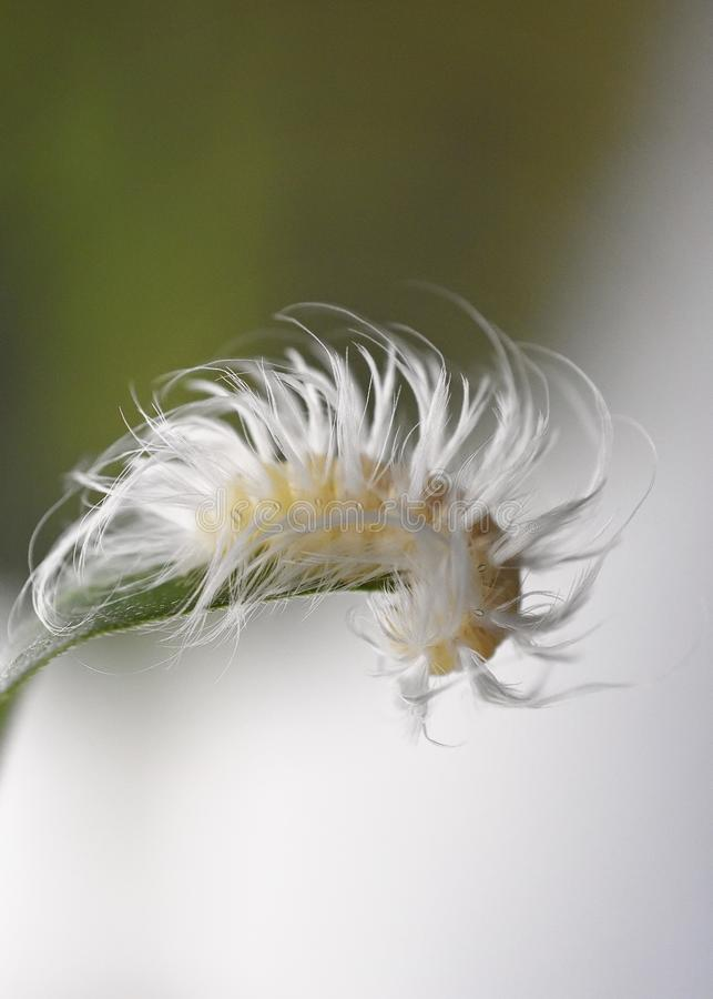 Macro Caterpillar on Leaf Close Up stock image
