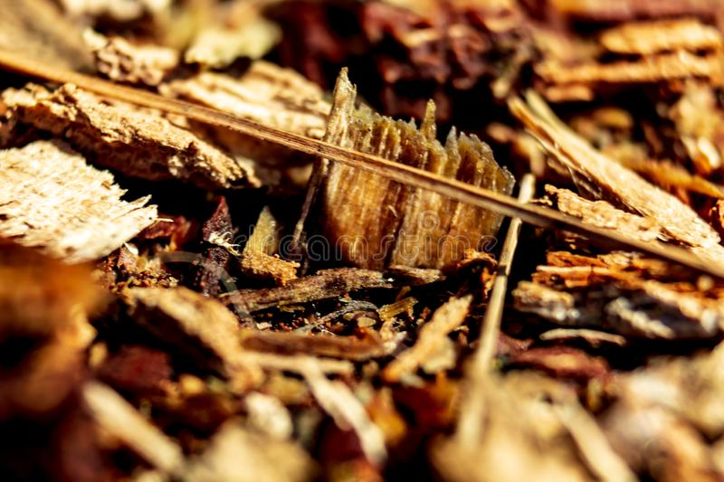 Macro close up of the forest floor in Ontario, Canada stock image