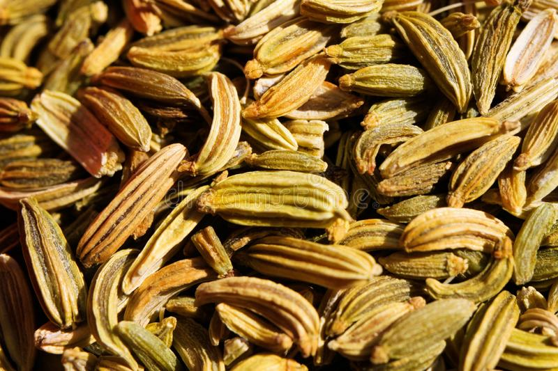 Macro close up of pile with fennel seeds in bright sun light royalty free stock photo