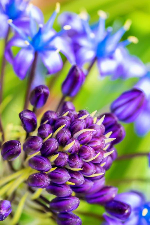 Macro of close-upfoto van mooie kleurrijke purpere, gele en blauwe bloem royalty-vrije stock fotografie