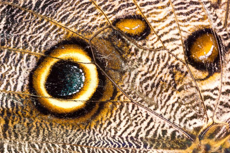 Macro closeup of brown butterfly wing texture background pattern. royalty free stock images