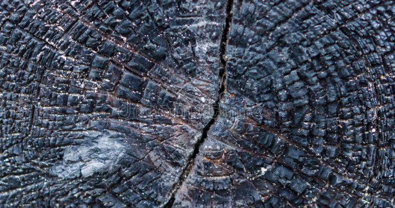 Macro closeup of a burned wooden trunk that is charred black, view on the wood rings, dark texture background royalty free stock image