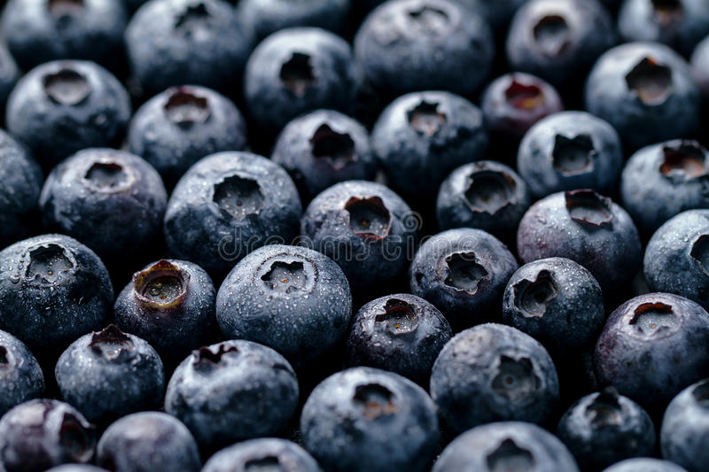 Macro Closeup of Fresh Tasty Blueberry Berry. Summer Food. Food. Fruit Healthy Life Concept royalty free stock photos