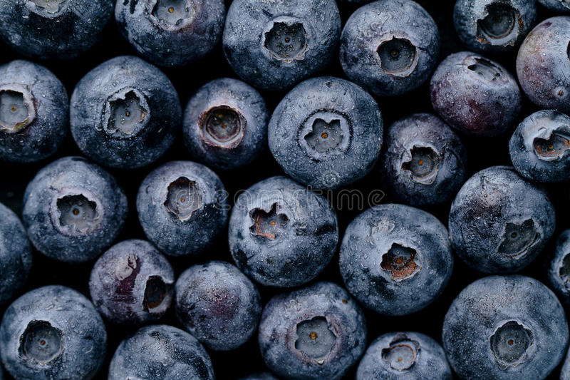 Macro Closeup of Fresh Tasty Blueberry Berry. Summer Food. Food royalty free stock photo