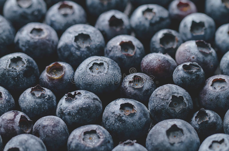 Macro Closeup of Fresh Tasty Blueberry Berry. Summer Food. Food stock photos