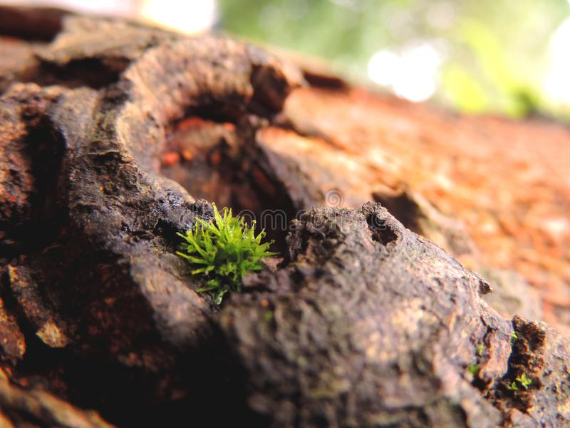 A macro closeup of grass grown on a tree bark royalty free stock photography