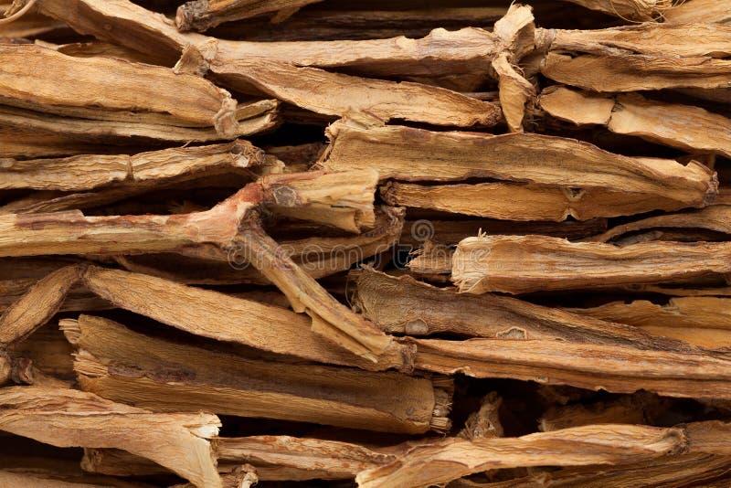 Macro closeup of organic Veldt Grape (cissus quadrangularis). Macro closeup background texture of organic Veldt Grape (cissus quadrangularis stock image