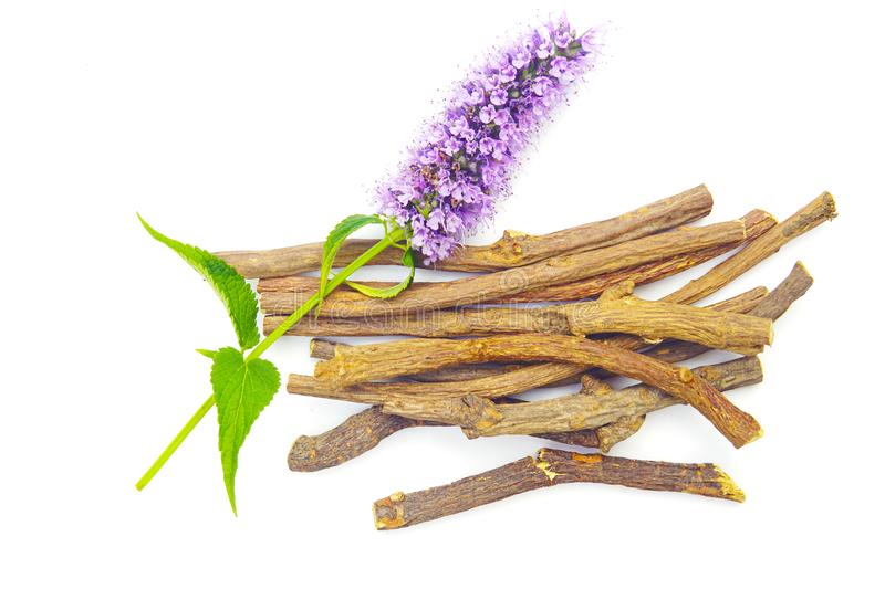 Purple pink blue flower liquorice roots sticks  Agastache garden herb licorice liquorice  isolated on white stock photography
