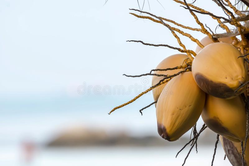 Macro closeup shot of coconut fruits with blurry background. Space for text or message stock images