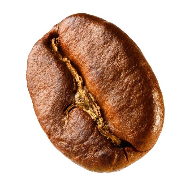 One Brown Bean