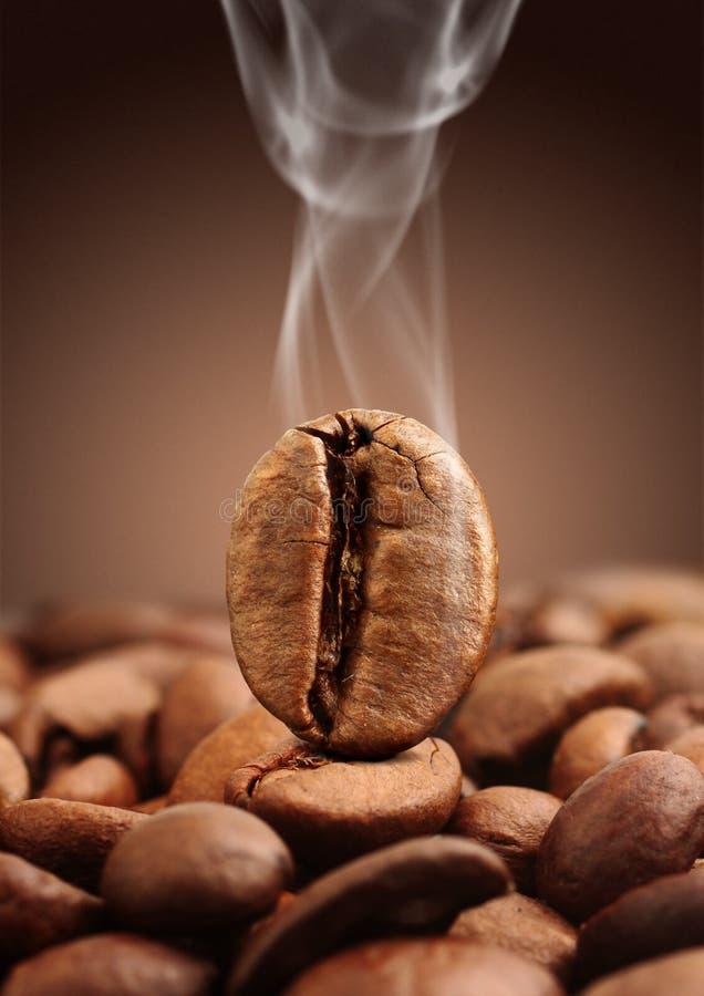 Macro coffee bean with smoke on brown background royalty free stock photos