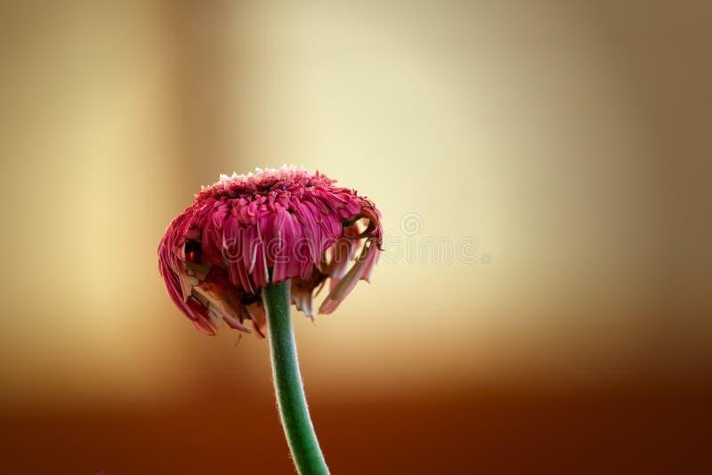 Macro coloré de fleur photos libres de droits