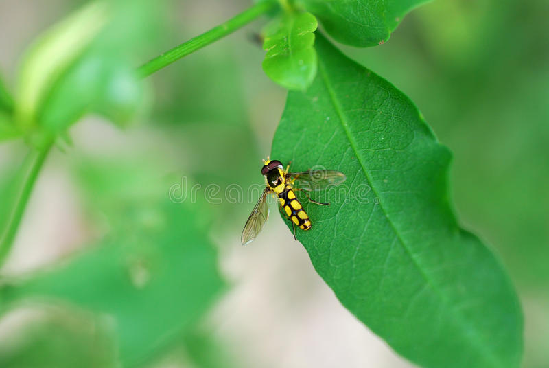 Colorful Insect Royalty Free Stock Photography