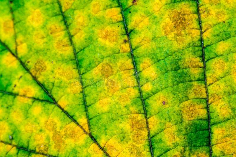 Macro colorida de la hoja del otoño fotos de archivo libres de regalías