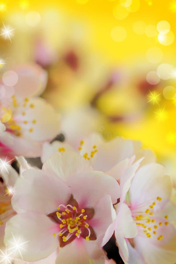 Macro colpo dei fiori della mandorla immagine stock