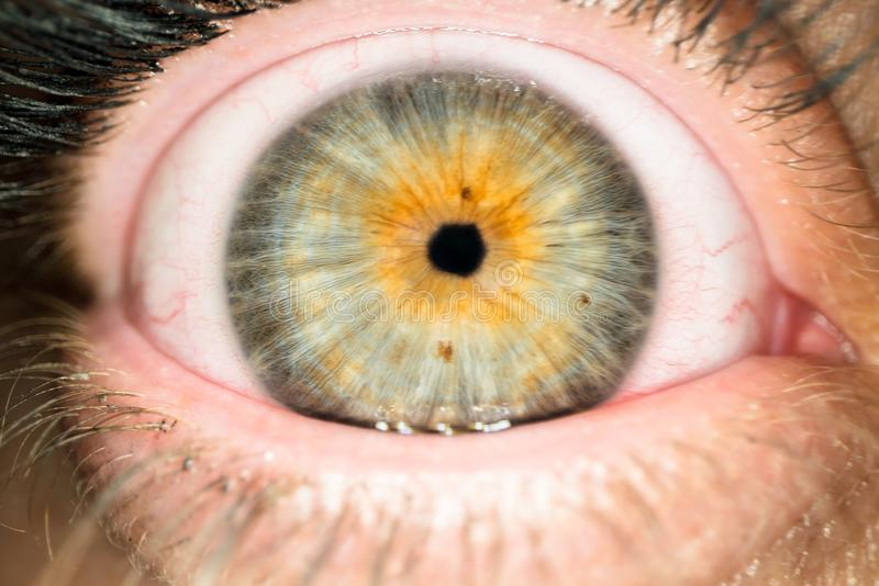 Macro colpo del bulbo oculare della donna con il piccolo allievo Chiuda su della palla femminile dell'occhio fotografia stock