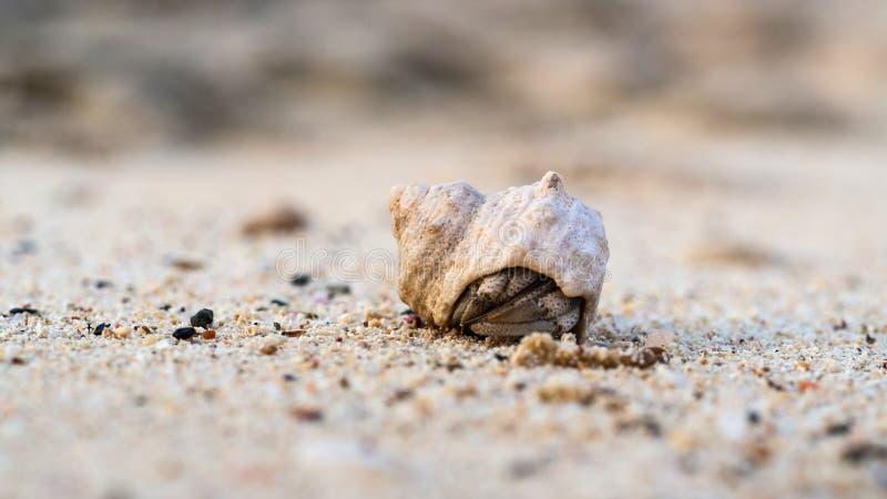 Macro colpo del paguro minuscolo che si nasconde nelle coperture sulla sabbia, reparto basso del campo fotografia stock libera da diritti