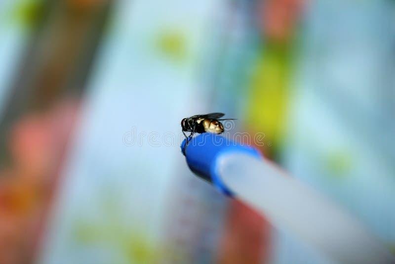 Macro colpo di Flyes fotografie stock libere da diritti