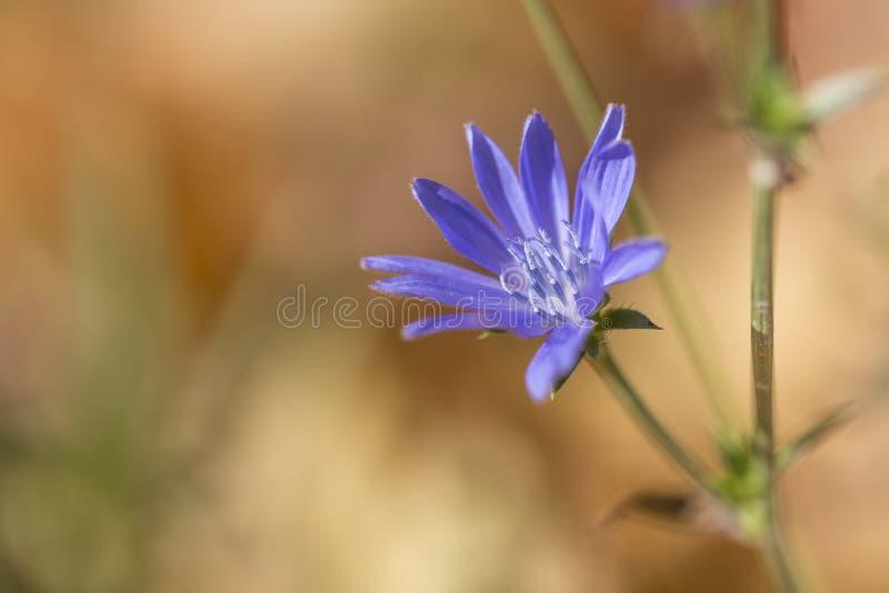 Macro colpo di un fiore blu in autunno fotografie stock libere da diritti