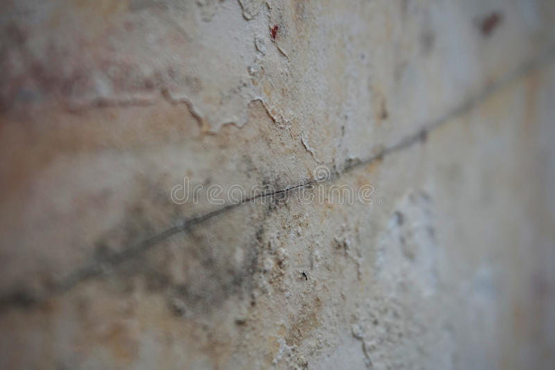 Macro criqué de mur photographie stock libre de droits