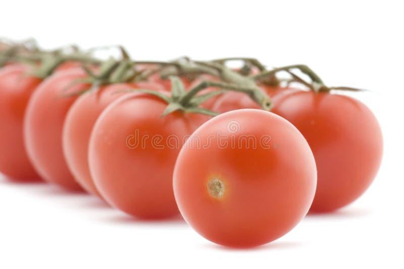 Macro cru do tomate imagem de stock royalty free