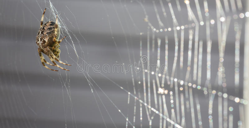 Macro cruzada de la araña con el web de araña imagenes de archivo